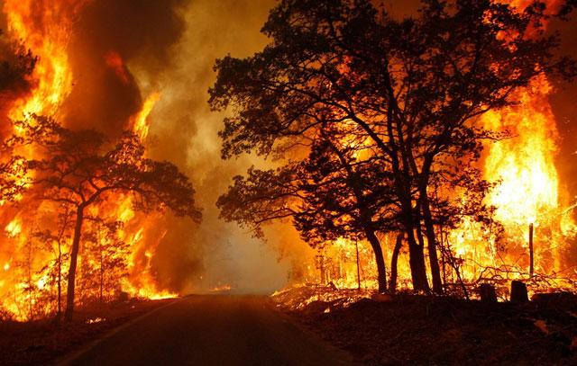 ilustrasi Inilah Kebakaran Hutan Paling Mematikan di Dunia